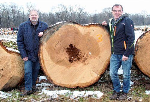 Als stärksten Stamm präsentierten WBV-Vorsitzender Georg Höhensteiger (links) und Geschäftsführer Michael Heffner diese mächtige Eiche. Foto  Fischer