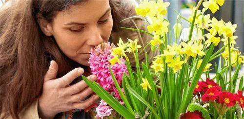 Duftende Frühlingsblüher verschönern die Osterzeit.Foto gmh