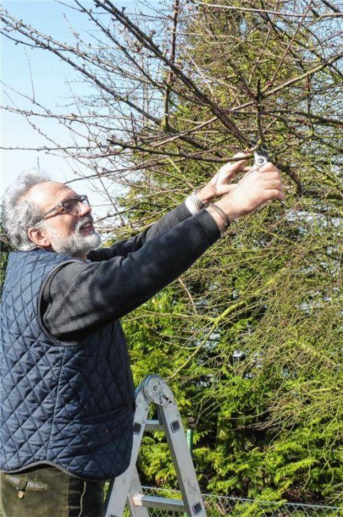 Mit der richtigen Schnitttechnik kann man Bäumen zu neuer Kraft verhelfen.Foto bgl