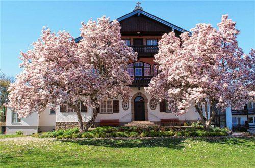 Haus St. Johann mit den berühmten Magnolienbäumen. Fotos do