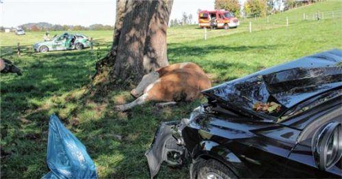 Die Kuh wurde vom Opel erfasst und war nach Angaben der Polizei sofort tot. Foto jre