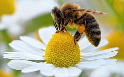 """""""Faszination Honigbiene"""" lautet einer der Programmpunkte im neuen Semester der VHS Bad Aibling. Foto  dpa"""