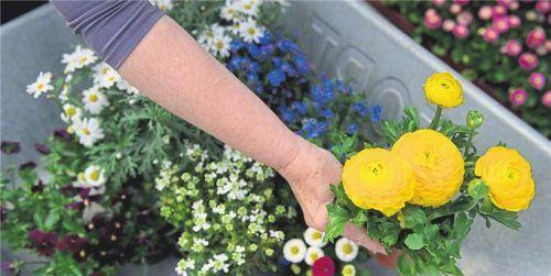 Ideale Bedingungen: Jetzt ist der Boden noch ausreichend feucht, daher lässt sich nun besser anpflanzen als bei höheren Temperaturen. Foto Shutterstock