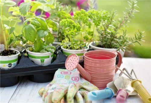 Kräuter anpflanzen: Eine sinnvolle Beschäftigung in Corona-Quarantäne-Zeiten.Foto Pixabay