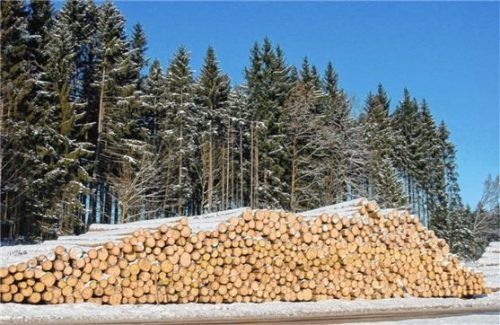 Der Winter ist traditionell die Zeit für Holzarbeiten.  Foto Rehberg