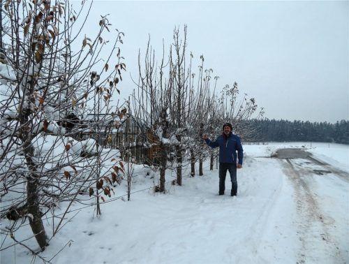 Helmut Schmid, Vorstand des Gartenbauvereins Niedertaufkirchen/Roßbach, beim Schneiden des Edelreis am Spalierobst des Gartenzauns. Foto  Jaensch
