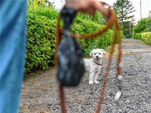 Künftig gibt es auf öffentlichen Straßen und Wegen in Bruckmühl einen Leinenzwang. Kleine Hunde sind davon ausgenommen, sie dürfen weiter herumtollen. Nur die großen Hunde ab einer Schulterhöhe von 50 Zentimetern müssen an die Leine. Foto Dpa/ Walzberg