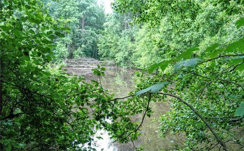Erlebnisort Wald: Im Sollacher Forst hat das Isenwerk Pläne für Erlebnispfade, die die Besucher lenken – und einen Waldspielplatz.Foto Huber