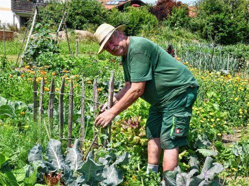 Raimund Ratzka, Vorsitzender des Obst- und Gartenbauvereins, inmitten des Lehr- und Selbstversorgergartens in Stephanskirchen-Schloßberg. Dort werden bevorzugt alte Obst- und Gemüsesorten angebaut.Foto Schlecker