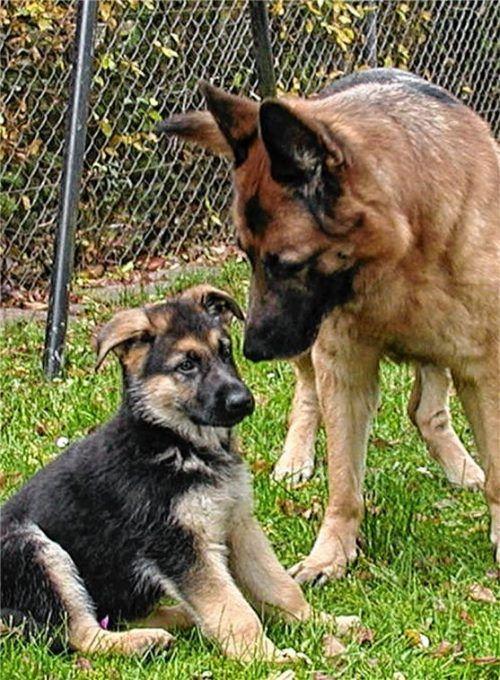 Auch Hunde müssen lernen, miteinander umzugehen.Foto re