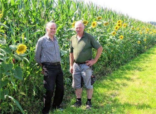 Blühstreifen um Auer Maisfelder seien eine pfundige und wichtige Sache fürs Auge, für Landschaft, Bienen und andere Insekten geworden, sagen Sepp Schlemer (links) und Anton Scheidl. Foto  Strim