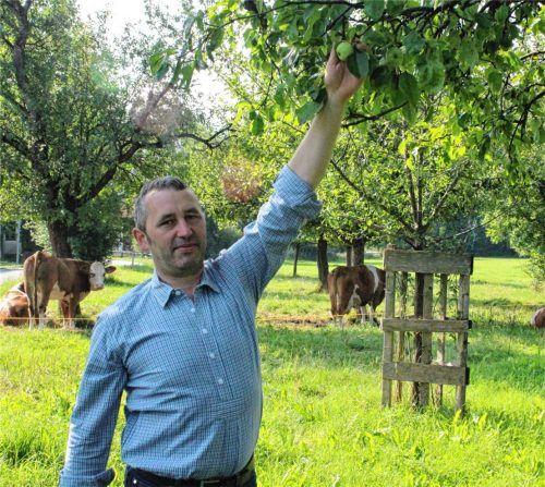 Johann Zehetmeier aus Bad Feilnbach versorgt auf seinen Streuobstwiesen Äpfel-, Birnen- und Zwetschgenbäume. In seiner Brennerei stellt er daraus Brände und Liköre her. Foto Hadersbeck