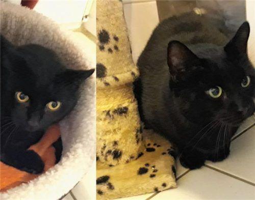 Mohrle (links) und Flori sind nur durch ihre unterschiedlichen Augenfarben auseinanderzuhalten. Foto Re