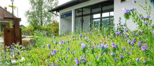 Die Blumen sind eine Freude fürs Auge und für die hungrigen Insekten. Foto Berger