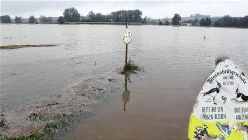 Die Küken sind zum Glück schon geschlüpft, denn jetzt sind die Wiesen rund um die Isen teilweise überschwemmt.
