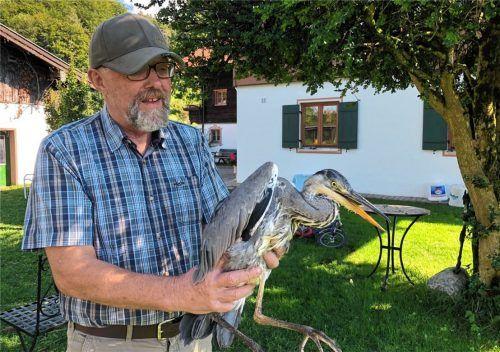 Wolfgang Stephl mit einem Graureiher, den er gesund pflegt. Fotos Geyer