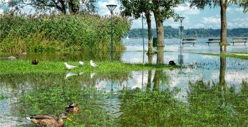Zumindest den Enten und Möwen gefällt der überschwemmte Uferbereich in Bernau. Foto Berger