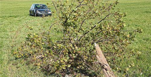 Baum umgefahren: Aus ungeklärten Umständen kam die Fahrerin von der Spur ab. Foto Barth