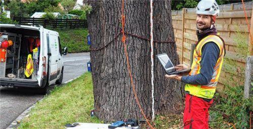 Computerunterstützte Arbeit am Baum: Experte Niko Winkler sammelt Daten für Windlast-Analysen. Foto Weithofer