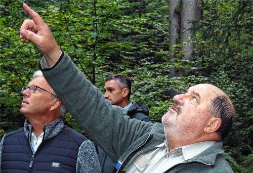 Der Blick ging oft nach oben in die Wipfel der Bäume: Revierförster Ludwig Krug (rechts) im Gespräch mit Bürgermeister Michael Kölbl (links) und dem Leiter des Liegenschaftsamtes, Robert Mayerhofer. Foto Weithofer