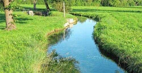 Der Goldbach bei Thalham führt viel Wasser. Das Geschiebe (Geröll und Schlamm) im Bachbett muss ausgehoben werden. Foto  Baumann