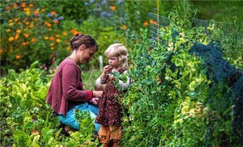Gärtnern in der essbaren Stadt: vor allem für Familien eine Möglichkeit, Kindern zu zeigen, welche Ernte die Natur abwirft. Foto /DPAJens Büttner
