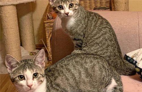 Rosalie (links) und Vroni sind neugierig, verspielt und sehr sozial.Foto Re